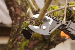pruning services In Vancouver WA and Camas Washington from Boulder Falls Landscape