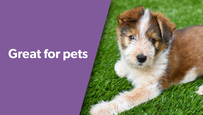 Dog on artificial grass, great for pets