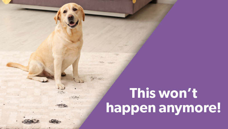 Dog with paw prints on carpet